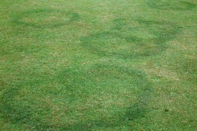 Fairy Ring Lawn Disease